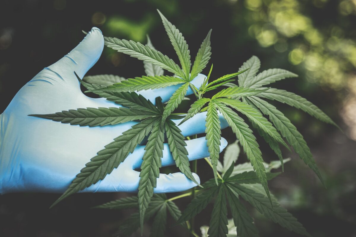 Growth of the Cannabis Industry image
